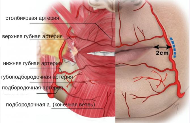 обильное кровоснабжение губ