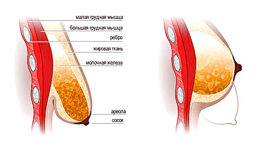 опущение молочной железы