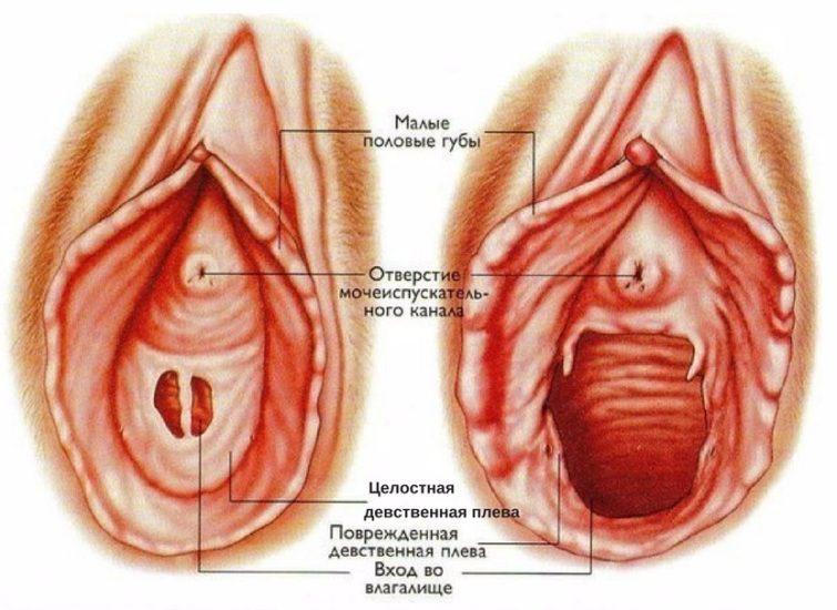 анатомия девственной плевы