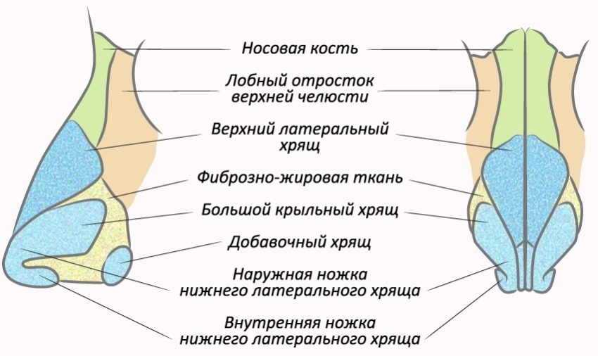 причины формирования костной мозоли после ринопластики