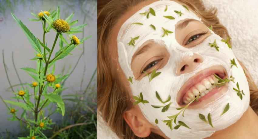 травы для лица