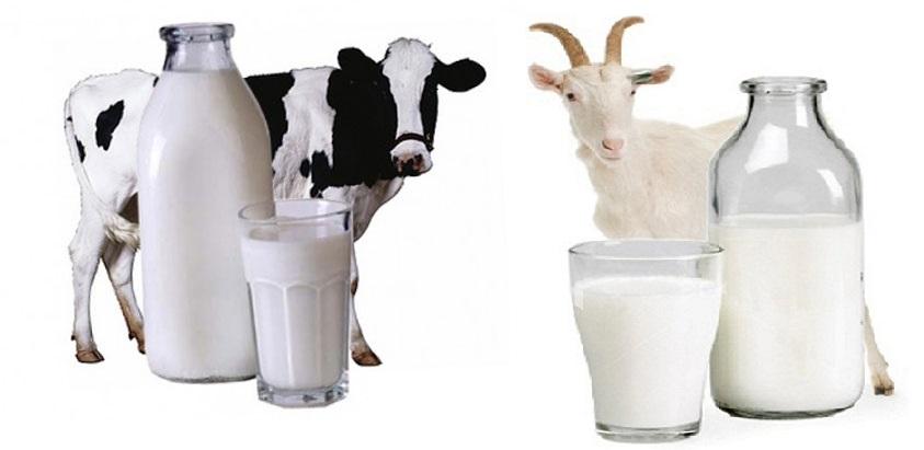 коровье и козье молоко