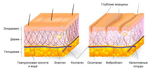 функции гиалуроновой кислоты
