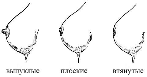 форма сосков