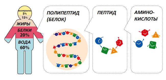 Косметика с пептидами